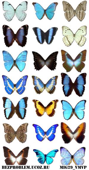 Скачать бесплатно иконки и значки с бабочками