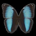 Самые красивые бабочки, иконки бесплатно