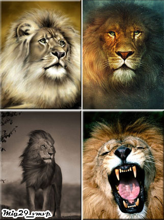 Обои на мобилу, лев, скачать бесплатно