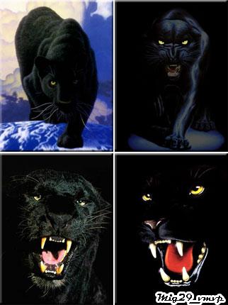 обои на мобилу, пантеры, черные ягуары, скачать бесплатно
