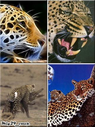 скачать обои с леопардом на телефон