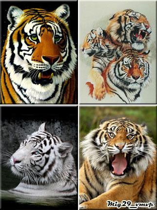 бесплатно картинки на телефон, тигры